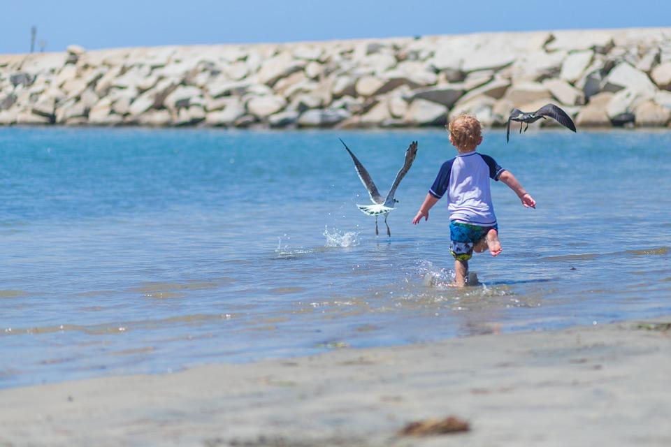 Boy, Beach, Chasing Birds, Joy, Fun, Child, Sea