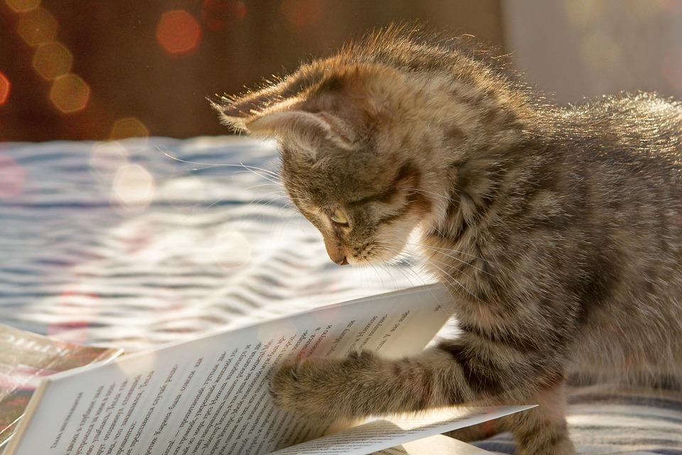 Gatinho, Animal De Estimação, Bonito, Animais, Pequeno
