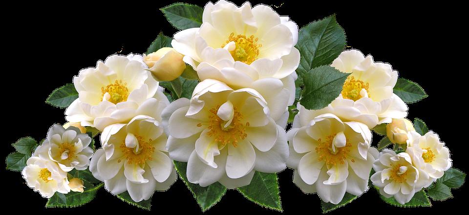Roses white flowers free photo on pixabay roses white flowers arrangement garden nature mightylinksfo