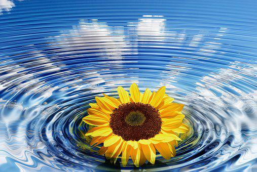 Wave, Sunflower, Concentric