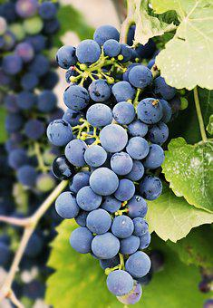 Grapes, Grapevine, Vine, Fruit, Wine