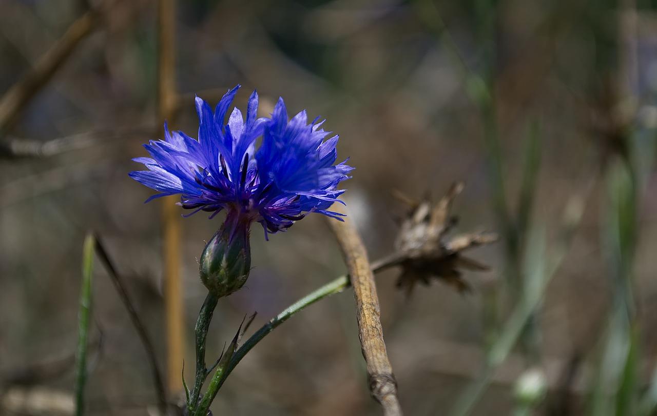 картинки цветов тюльпан ромашка василек гвоздика подсолнух фотографии