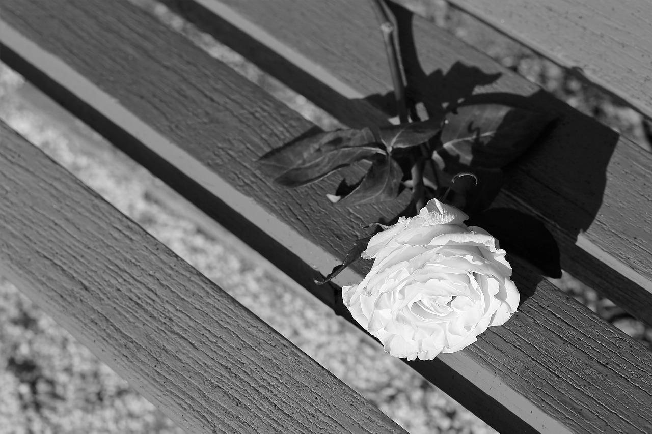 Розы на лавочке картинки