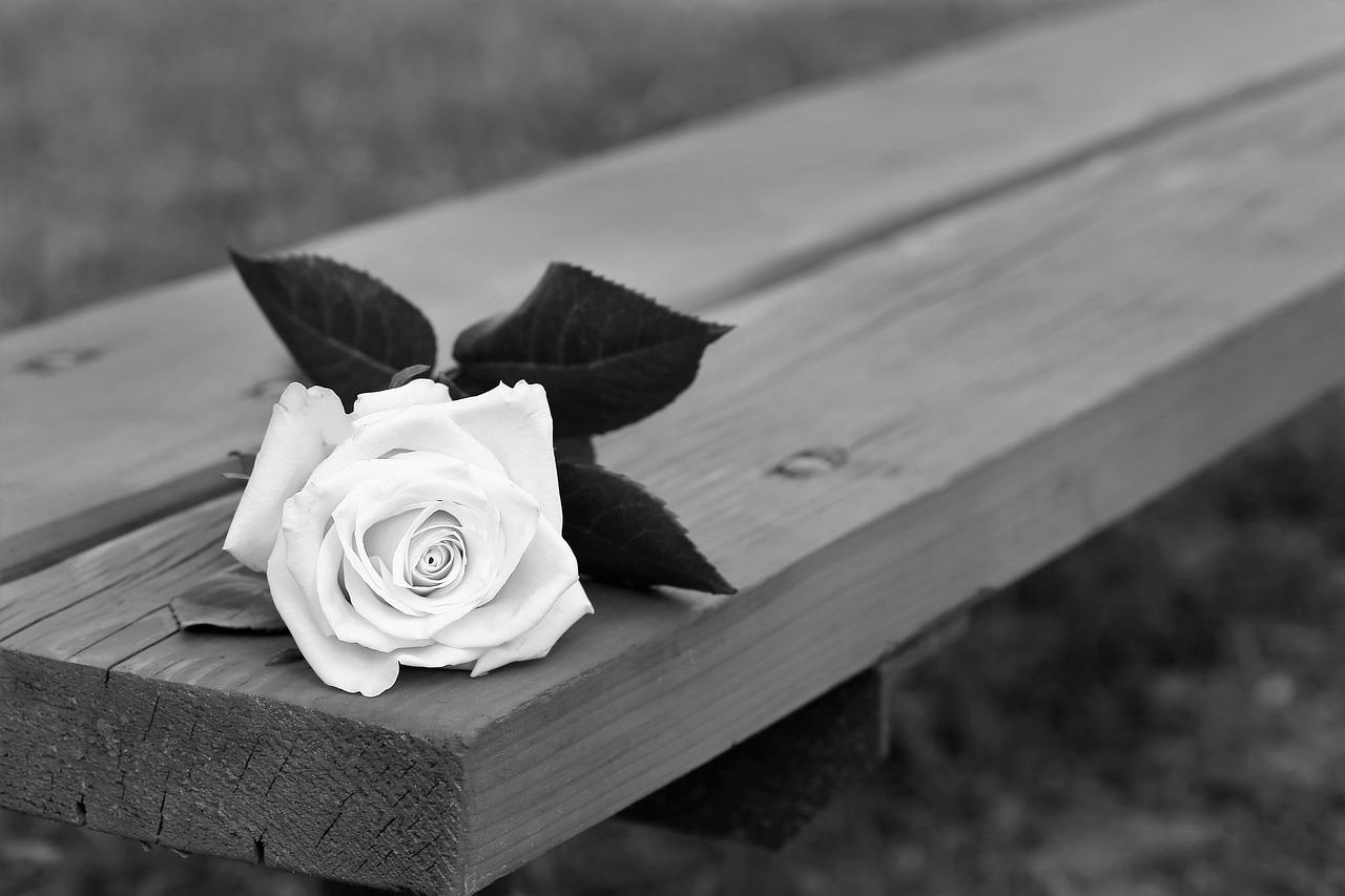 очень мощный цветы на скамейке фото чтобы заряда