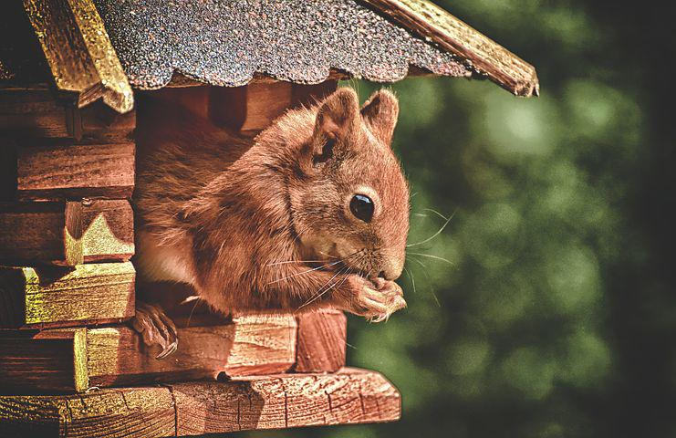 Photo of a squirrel in a home.