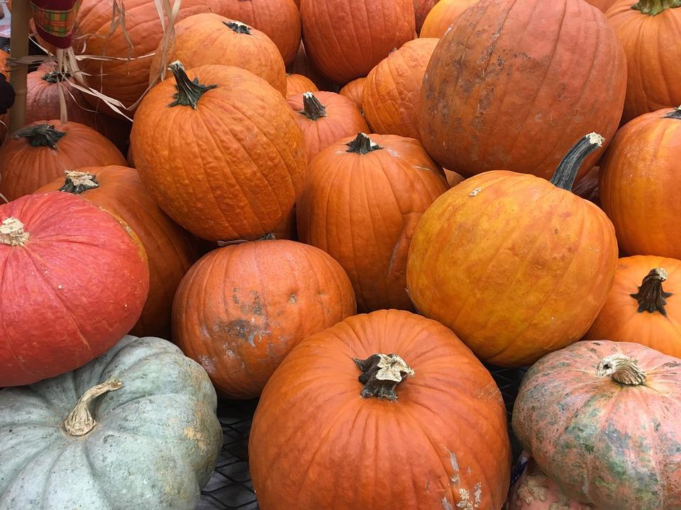 Pumkin Pumpkins Orange Free Photo On Pixabay Последние твиты от pumkin (@pumkinweb). pumkin pumpkins orange free photo on