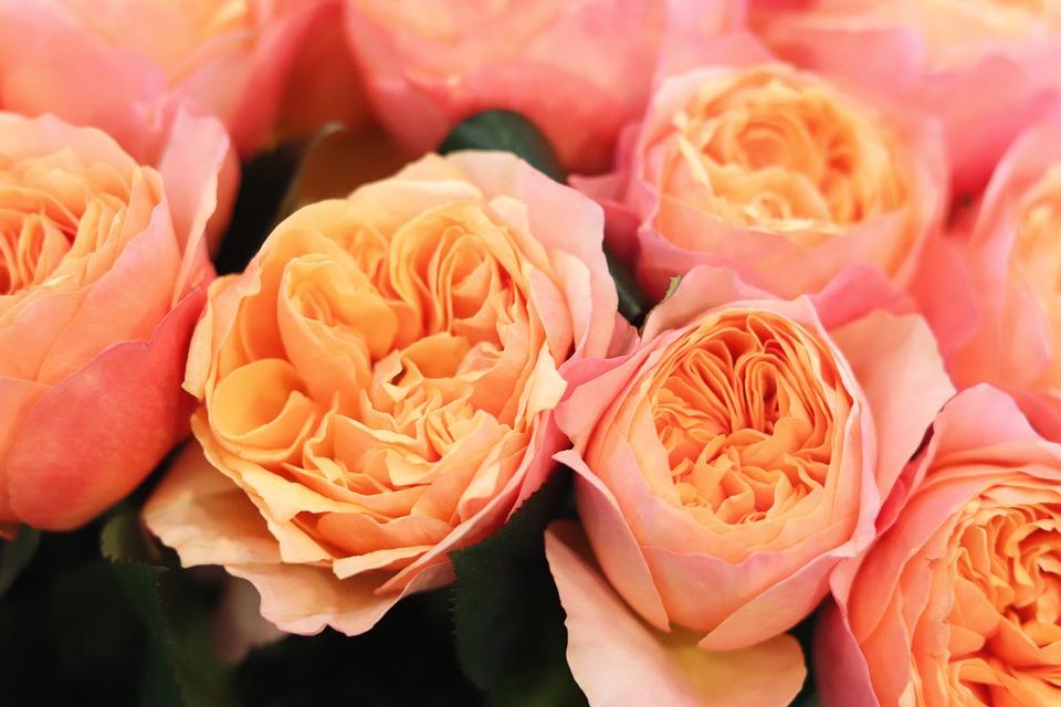 Romantic Flowers Beautiful - Free photo on Pixabay