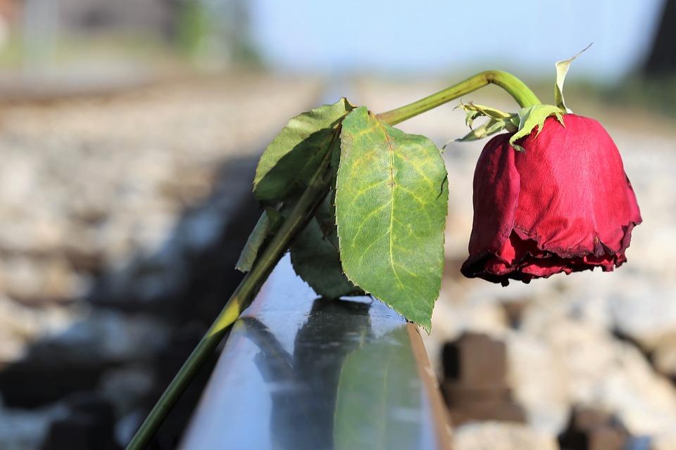 停止若者の自殺, 悲しいの赤いバラ, 痛みで, 悲惨さ, 鉄道, 失恋, 触れる, 愛するメモリ, 悲劇