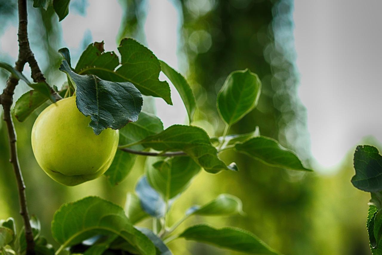 картинки листья яблоками нам