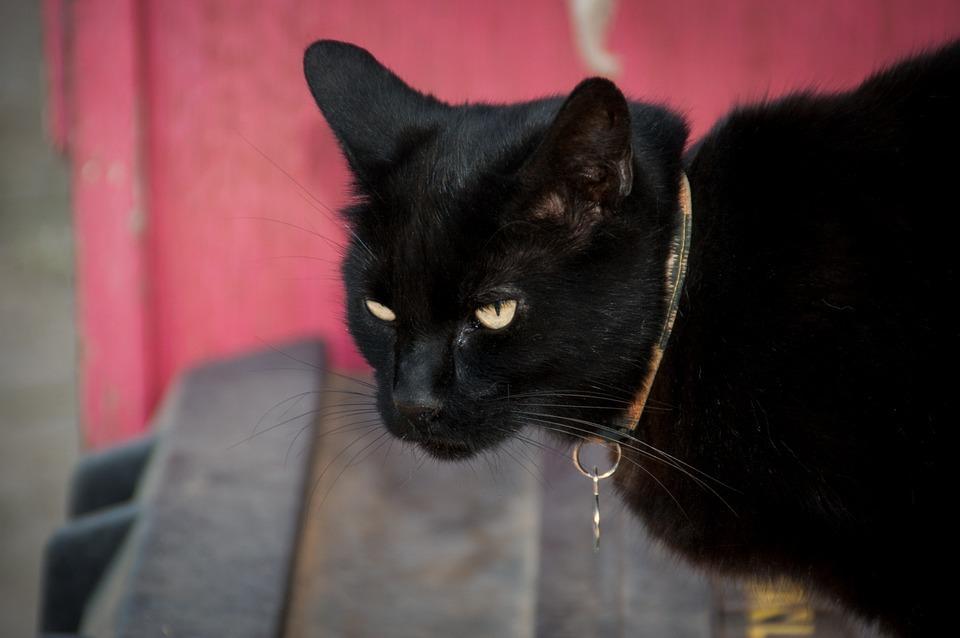 Kedi Yavru Hayvan Pixabayde ücretsiz Fotoğraf