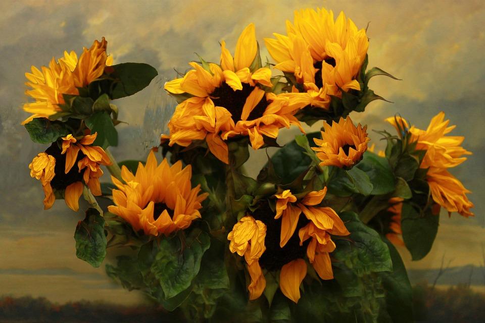 Ayçiçeği Karşı Pixabayde ücretsiz Fotoğraf
