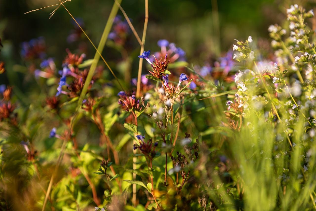 Полевые цветы травы купить минск, букеты