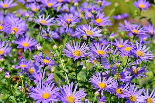 Superbe Garden Images · Pixabay · Download Free Pictures