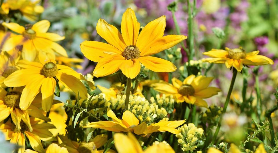 Fiori Gialli Per Aiuole.Aiuola Fiore Di Campo Fiori Foto Gratis Su Pixabay