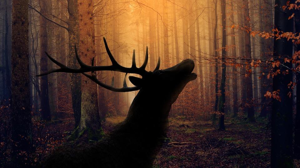Las, Jeleń, Rykowisko, Natura, Dziki, Krajobraz, Poroża