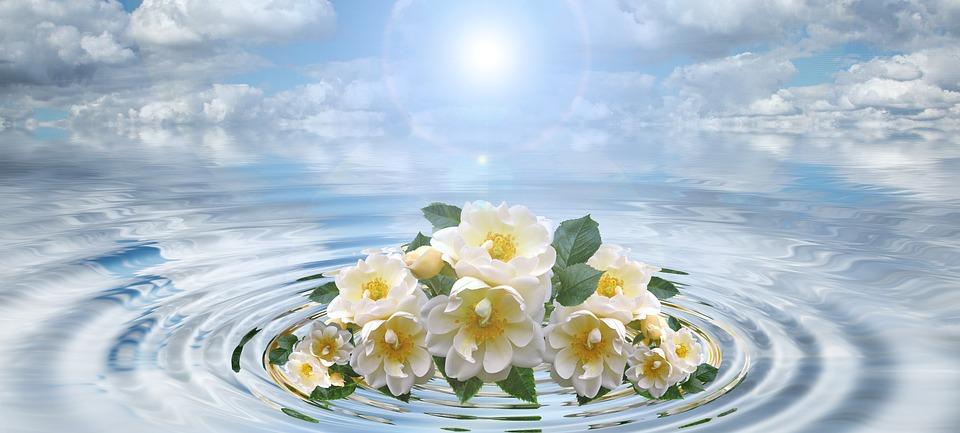 Waves, Flower, Bouquet, Concentric, Waves Circles