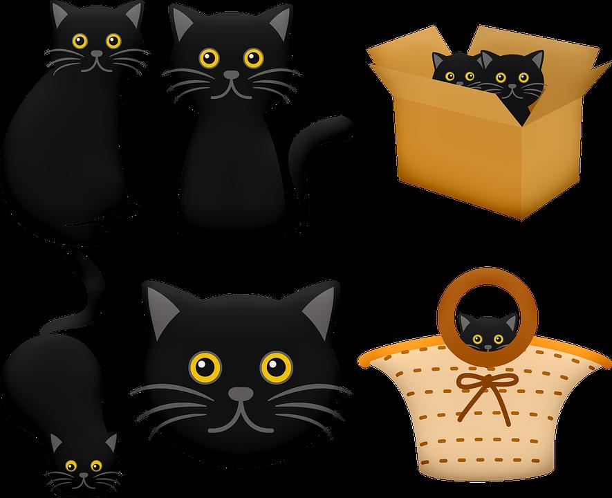 Čierna mačička diera pics
