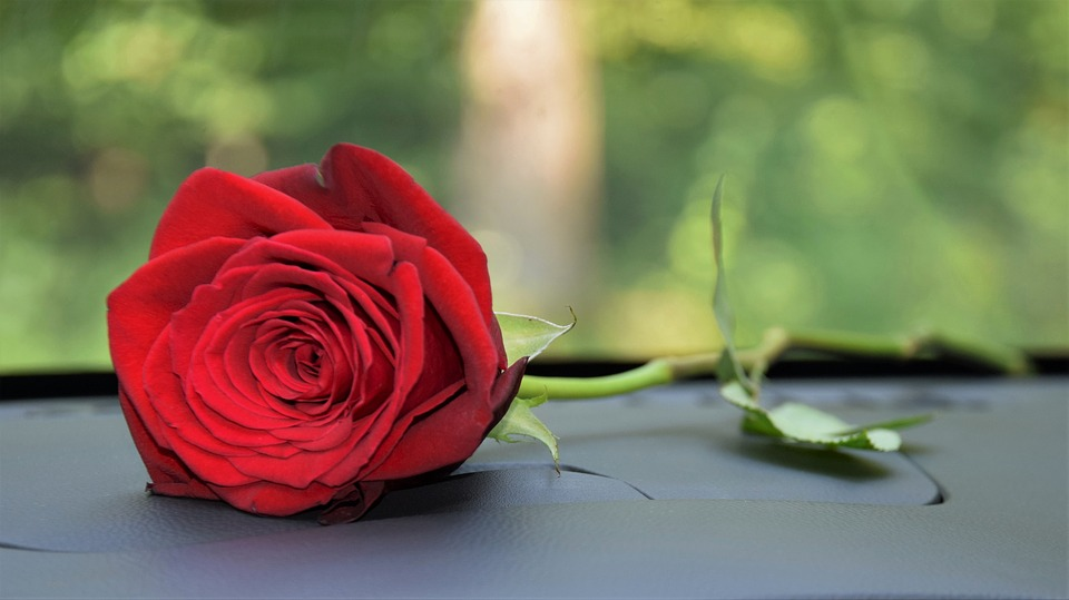 Red Rose On Car Dashboard Love - Free photo on Pixabay