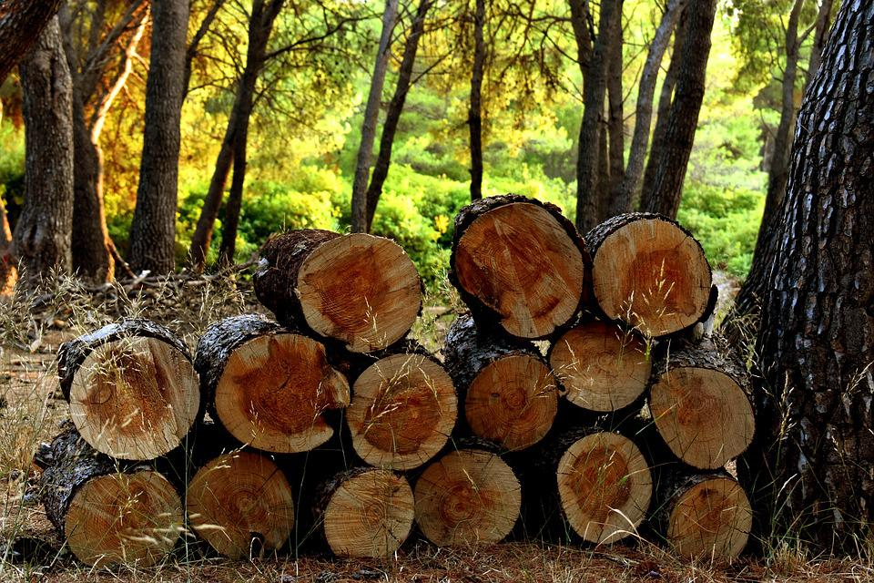 débarras bois Cantal