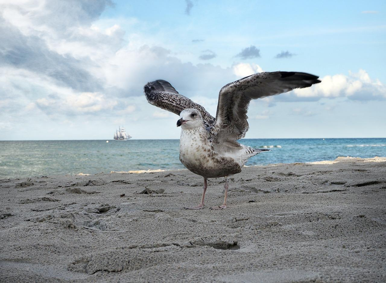 Чайка на море картинки прикольные
