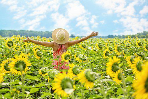 Sunflowers, Field, Woman, Yellow, Summer