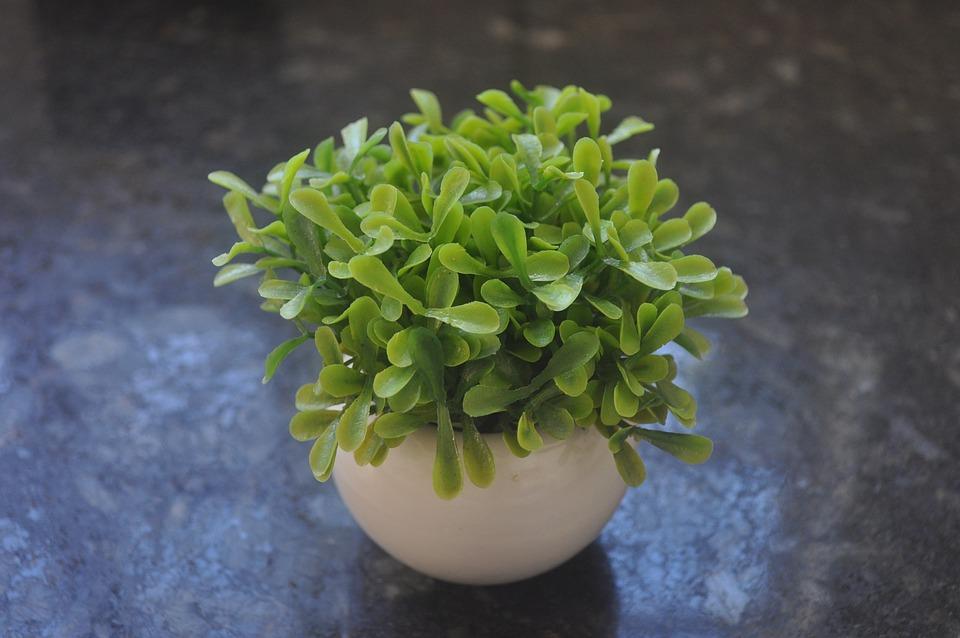 Plant Buchinha Artificial, Plant Artificial
