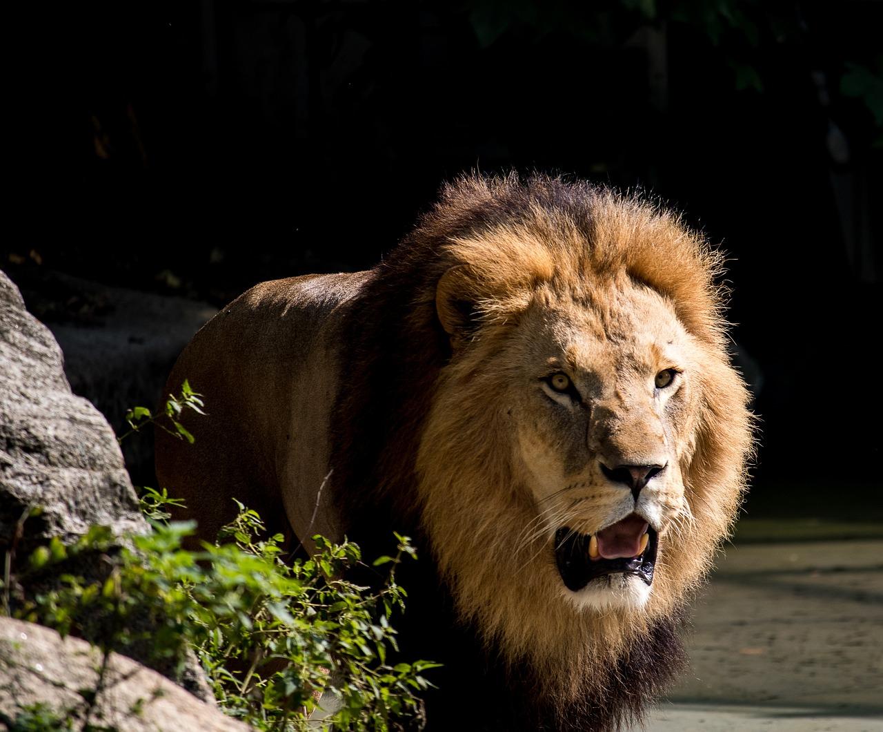 动物世界狮子 动物世界狮子全集