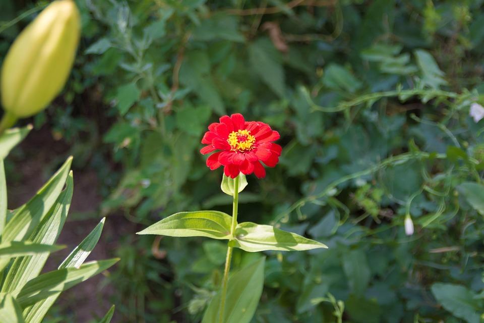 gratis tuinplanten tuin