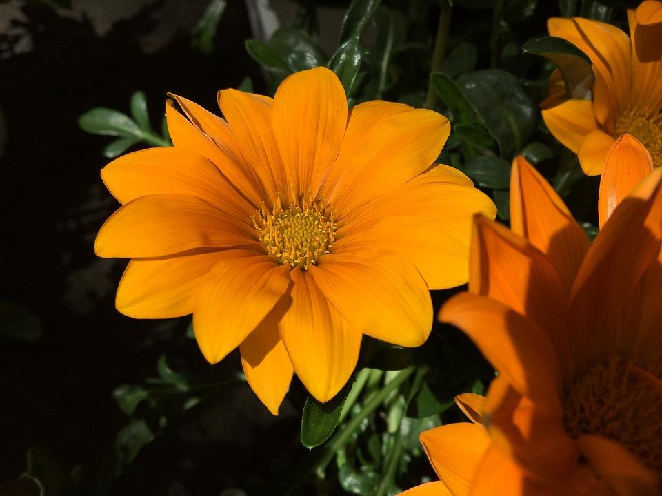 flower garden summer free photo on pixabay