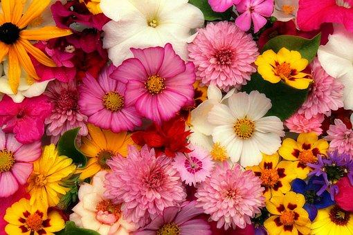 Blomster, Arrangement, Struds
