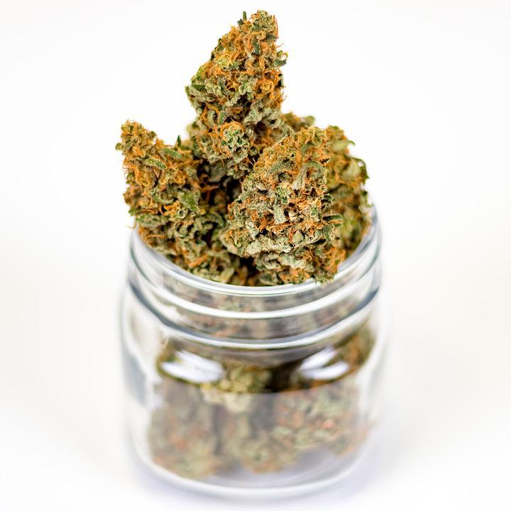 regulamentação do cultivo  de maconha medicinal, pote com flores de cannabis medicinal