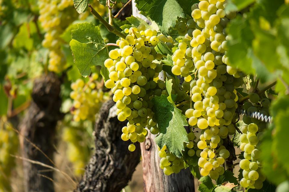 biele víno, Biele víno má veľa pozitívnych účinkov, poznáš ich?