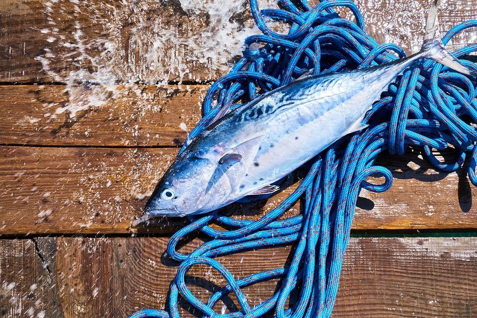 Pesce, Cibo, Corda, Blu, Buongustaio, Raw, Crudo