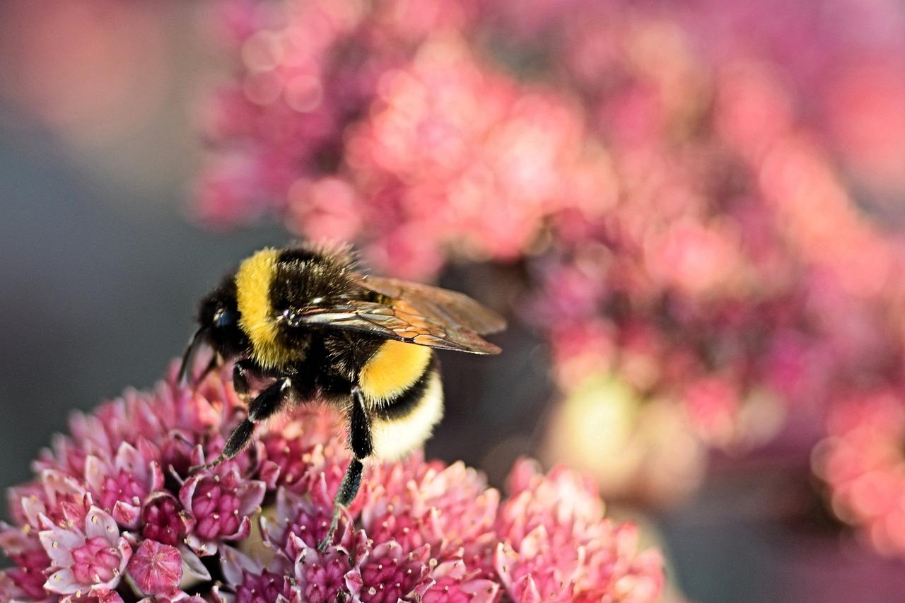 малому пчелы и шмели фото картинки туннелей