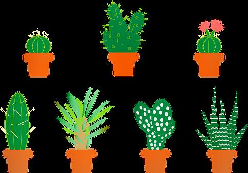 best-indoor-plants