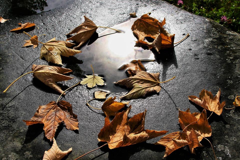 秋, ドライ, 秋には, 葉, ミラー, 風, グロー, 気分, ウェット, バックライト, 光, ネイチャー