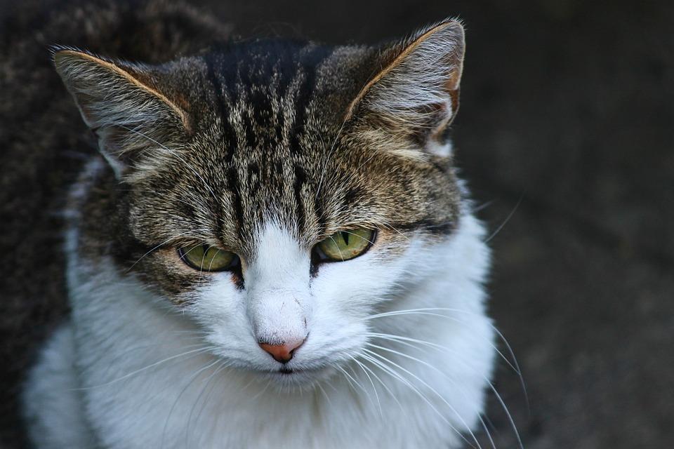 sladká hnědá kočička