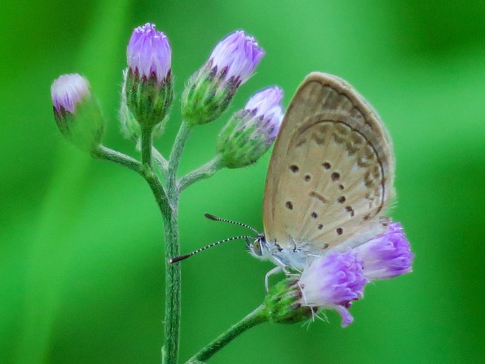 291e01f0edff Butterfly Príroda Letné - Fotografia zdarma na Pixabay