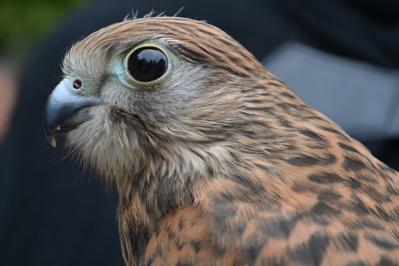 хищные птицы ярославской области фото с названиями с описаниями