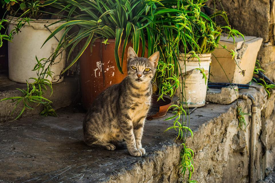 Cat, Stray, Young, Kitten, Animal, Outdoor, Tabby