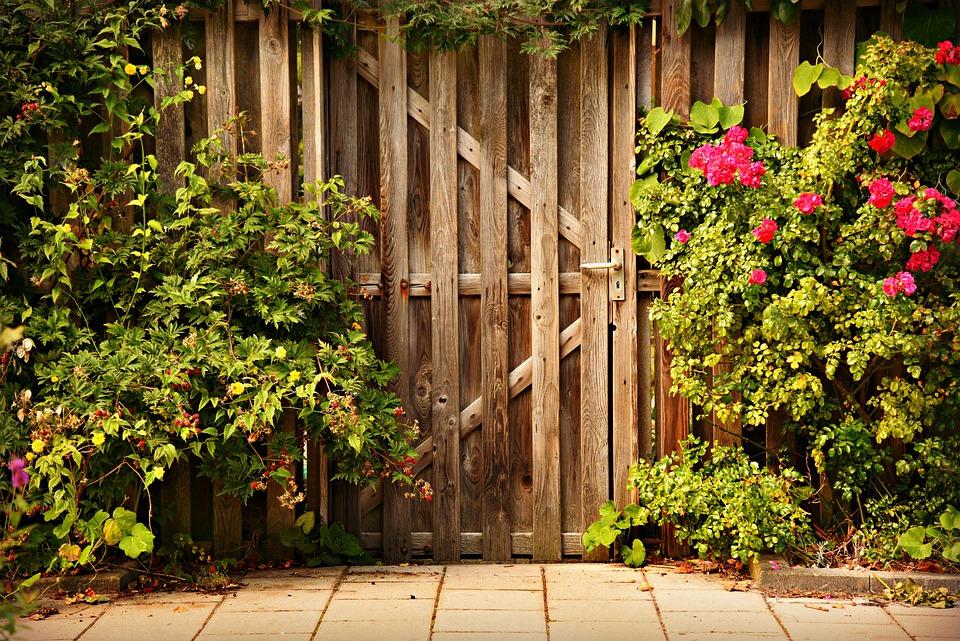 Wooden Door, Entrance, Garden, Rosebush, Pavement