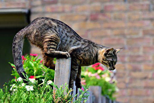 Cat, Animal, Mammal, Fence, Cat On Fence