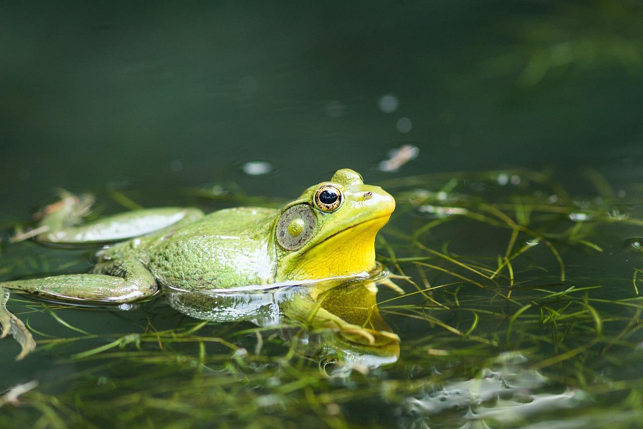 зависимости картинки с лягушками и рыбками она сменяется желтоватый