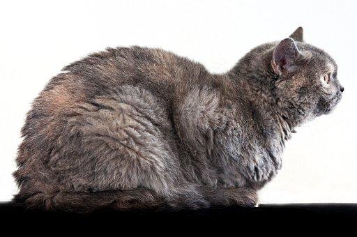 tučné čierne ženy mačička pics