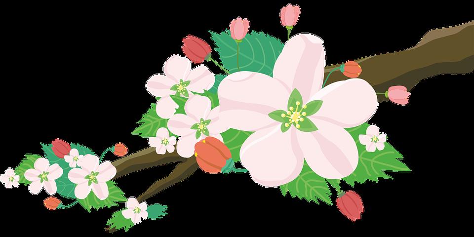 Apple, Fiori, Natura, Albero Da Frutto, Primavera