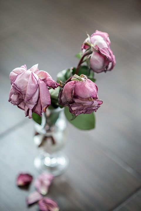 Rose Vase Dead Dried Free Photo On Pixabay