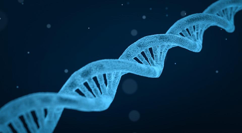 Dna, 文字列, 生物学, 3 D, バイオ テクノロジー, 化学, 医学, 研究, 医療, 科学