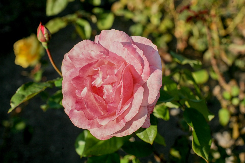 Blumen Blätter Zierbäume Der Kostenloses Foto Auf Pixabay