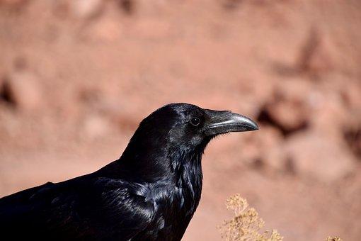 Veľké vtáky na čierne mužaLesbičky Sex Hračky videá