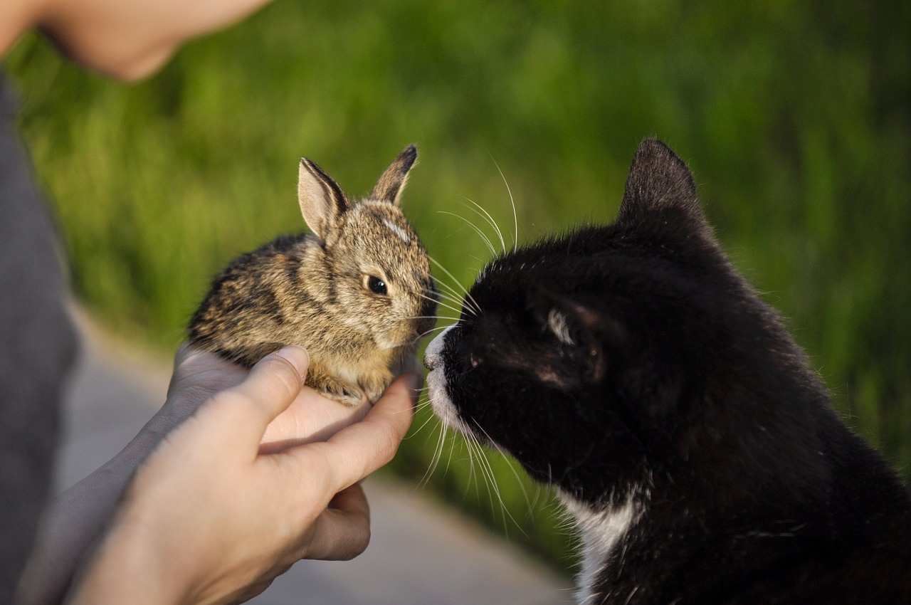 созвучно одному красивой фотографии кошки кроликов теперь